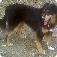 Adopt A Pet :: Lena - Minneapolis, MN