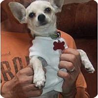 Adopt A Pet :: Sadie - Chimayo, NM