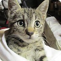 Adopt A Pet :: Radar - Plattekill, NY