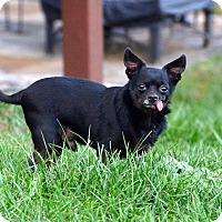 Adopt A Pet :: Casey - Rockville, MD