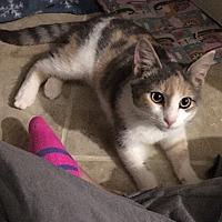 Adopt A Pet :: Odelia - Tampa, FL