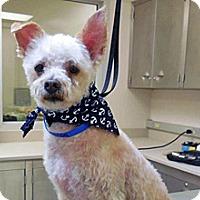 Adopt A Pet :: Waldo - Wildomar, CA