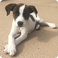 Adopt A Pet :: Willow - Phoenix, AZ