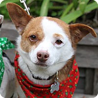 Adopt A Pet :: Ted - Pacific Grove, CA