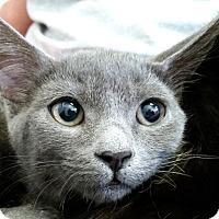 Adopt A Pet :: Galaxy - Sarasota, FL