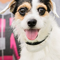 Adopt A Pet :: Roomba - Madison, WI