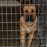 Adopt A Pet :: Rover - Salem, WV