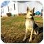 Photo 3 - German Shepherd Dog Dog for adoption in castalian springs, Tennessee - Rocky