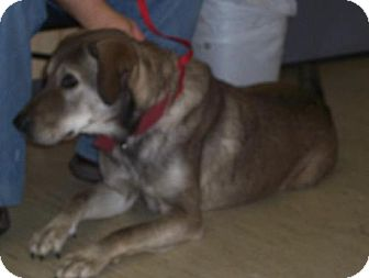 Hound (Unknown Type) Mix Dog for adoption in Mt. Vernon, Illinois - Queso