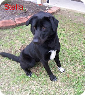 Retriever (Unknown Type) Mix Dog for adoption in Slidell, Louisiana - Stella