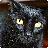 Adopt A Pet :: Jaden - Saranac Lake, NY