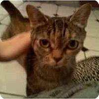 Adopt A Pet :: Precious - Greenville, SC