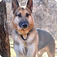 Adopt A Pet :: Ezra - Indianapolis, IN