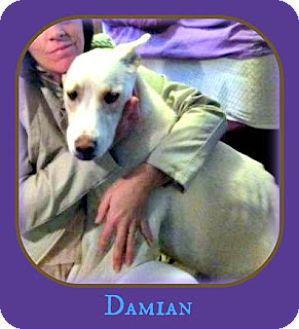 Husky/German Shepherd Dog Mix Dog for adoption in Decatur, Georgia - Damian URGENT