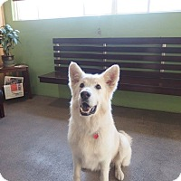 Adopt A Pet :: Shane-the complete package! - Redondo Beach, CA
