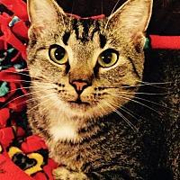 Adopt A Pet :: Peanut - Greenback, TN