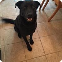 Adopt A Pet :: Nash - Saskatoon, SK