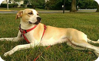 Hound (Unknown Type) Mix Dog for adoption in Woodbridge, Virginia - Daisy