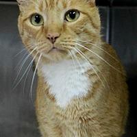 Adopt A Pet :: Peppo - Hilton Head, SC
