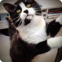Adopt A Pet :: Scout - Weimar, CA