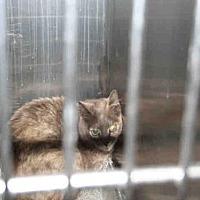 Adopt A Pet :: URSULA - Aurora, IL