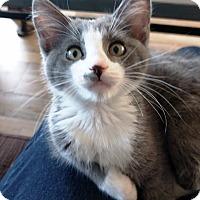 Adopt A Pet :: Big Ben - Orange, CA