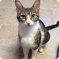 Adopt A Pet :: Erin - Independence, MO