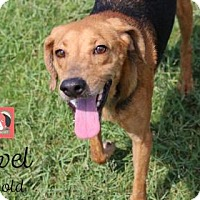 Adopt A Pet :: Jewel - Lonely Heart - Gulfport, MS
