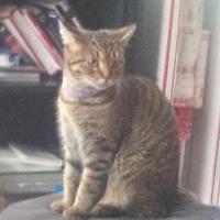 Adopt A Pet :: Ireland - Warren, MI