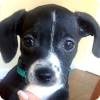 Adopt A Pet :: Baby Eric - Oakley, CA