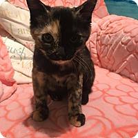 Adopt A Pet :: Asya - Staten Island, NY