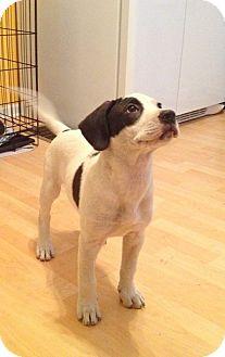 Hound (Unknown Type) Mix Puppy for adoption in Cincinnati, Ohio - Carlos