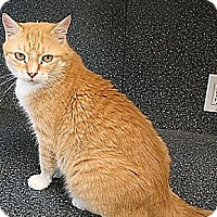 Adopt A Pet :: Adeley (Westhampton) - New York, NY