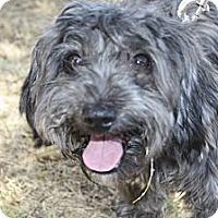 Adopt A Pet :: Biscuit - Phoenix, AZ