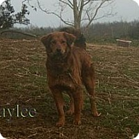 Adopt A Pet :: Haylee ADOPTION PENDING - Danbury, CT