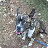 Adopt A Pet :: Salina - Eden, NC