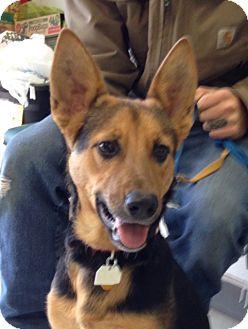 German Shepherd Dog Mix Dog for adoption in Yukon, Oklahoma - Aggie