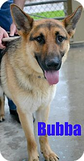 German Shepherd Dog Mix Dog for adoption in Beaumont, Texas - Bubba