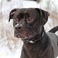 Adopt A Pet :: Milton - Port Washington, NY