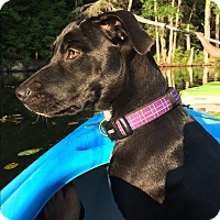 Adopt A Pet :: Dolly - LOVES TO SWIM/MEET HER - Norwalk, CT