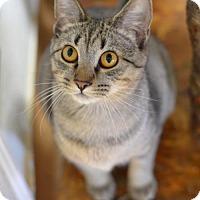 Adopt A Pet :: Aeryn170060 - Atlanta, GA