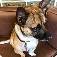 Adopt A Pet :: Stubs - Las Vegas, NV