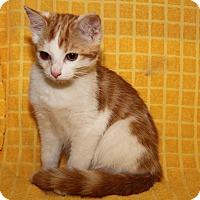 Adopt A Pet :: Angelina - Marietta, OH