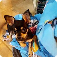 Adopt A Pet :: Savannah and Murphy - Huntsville, AL