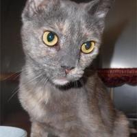 Adopt A Pet :: Legend - Waupaca, WI