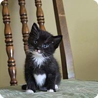 Adopt A Pet :: Olive - Columbia, TN