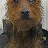 Adopt A Pet :: 17-08-2489 Ruby - Dallas, GA