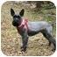 Photo 1 - Schnauzer (Miniature) Mix Dog for adoption in Muldrow, Oklahoma - Eliott