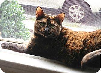 Domestic Shorthair Cat for adoption in N. Billerica, Massachusetts - Cracker