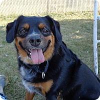 Adopt A Pet :: Patrick - Grayslake, IL
